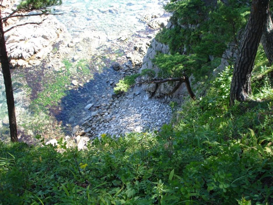трава на склоне, трава в воде | бухта Теляковского, Хасанский район