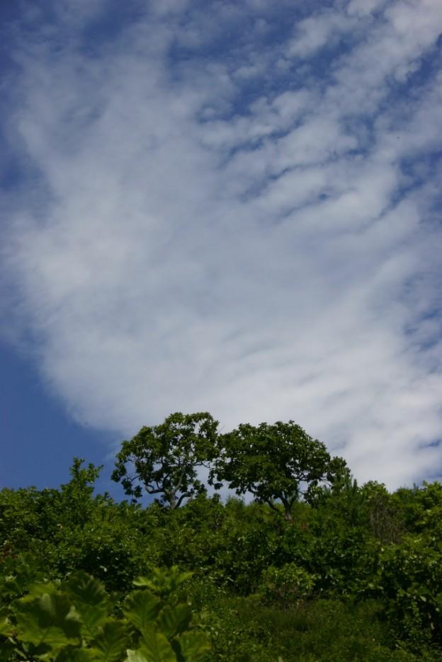небесные ребра | бухта Теляковского, Хасанский район