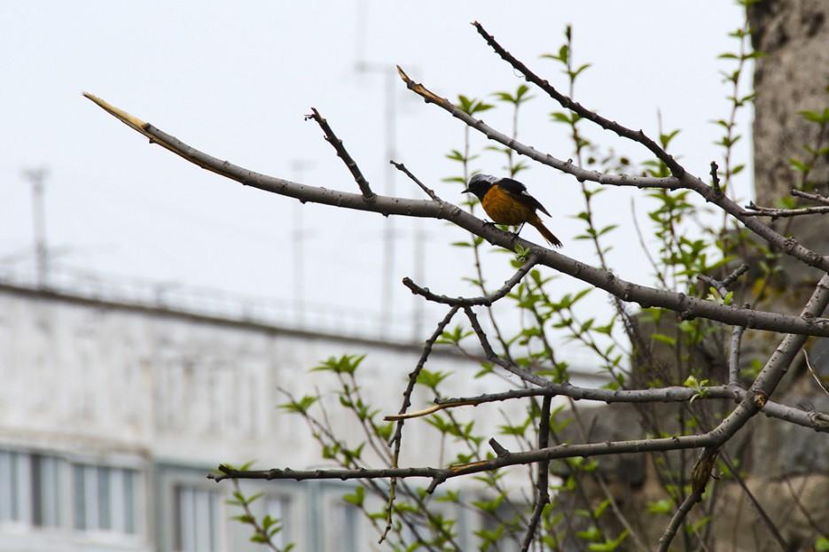 Птичка. Снято в районе укреплений №2.   Природа Приморского края. Разное.
