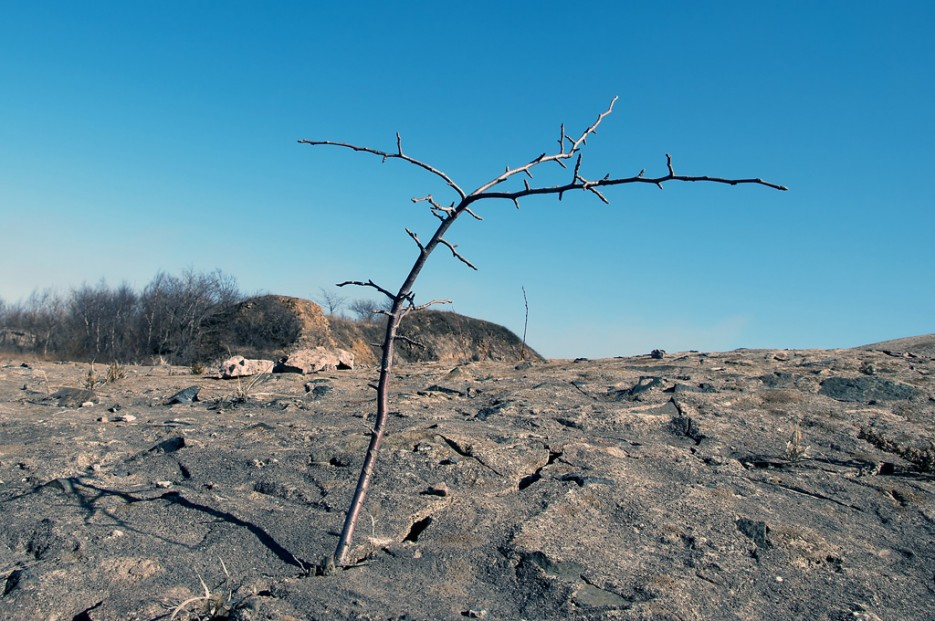 Жизнь всегда найдёт выход. Дерево проросшее и пробившееся через бетон форта № 5, что на горе Зубрицкого. | Природа Приморского края. Разное.