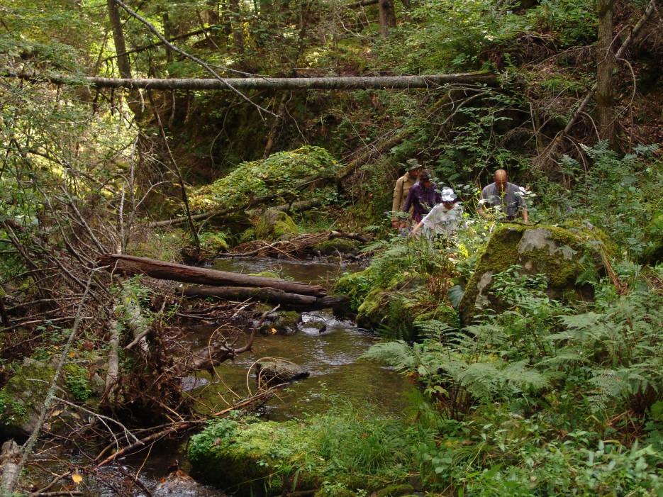 Непроходимые джунгли Приморья. Река Милоградовка. Лазовский район.   Река Милоградовка. Ольгинский район.