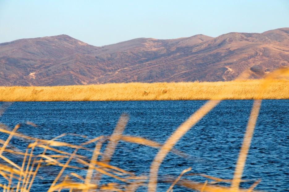 Озеро среди камышей   Хасанские болота осенью. Часть 2.