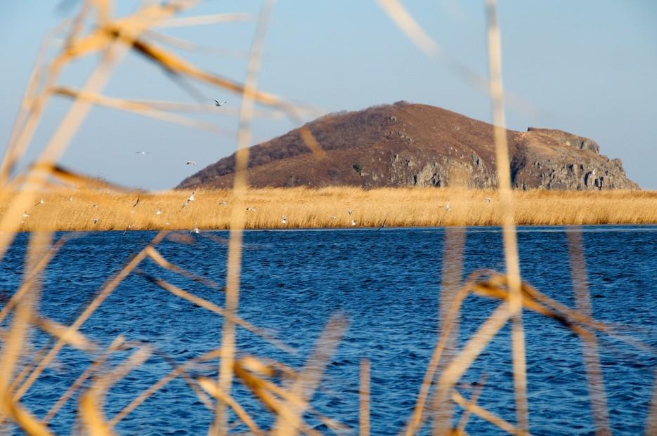 Озеро среди камышей, протоки. Полуостров Островок Фальшивый. | Хасанские болота осенью. Часть 2.