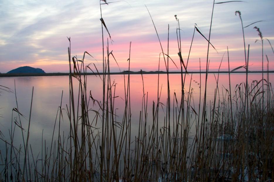 Розовый восход   Хасанские болота осенью. Часть 2.