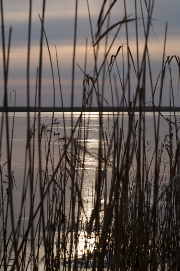 Отражение на льду | Хасанские болота осенью. Часть 2.