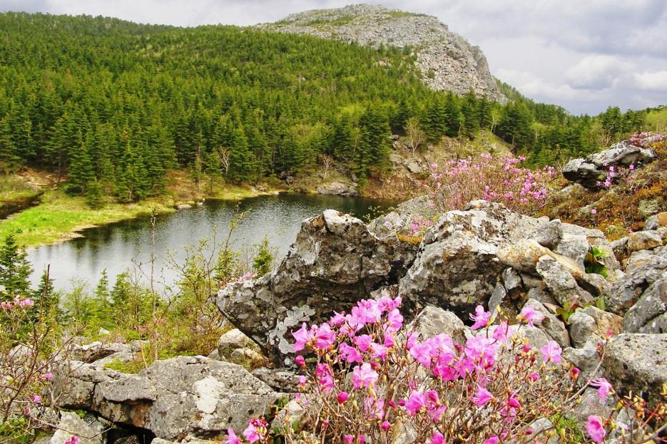 Озеро Алексеевское и вершина г. Ольховая (Китайская) | Горы
