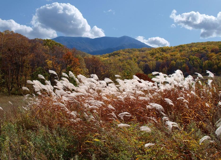 Гора Фалаза в октябре (Шкотовский район, вид из с. Анисимовка) | Горы