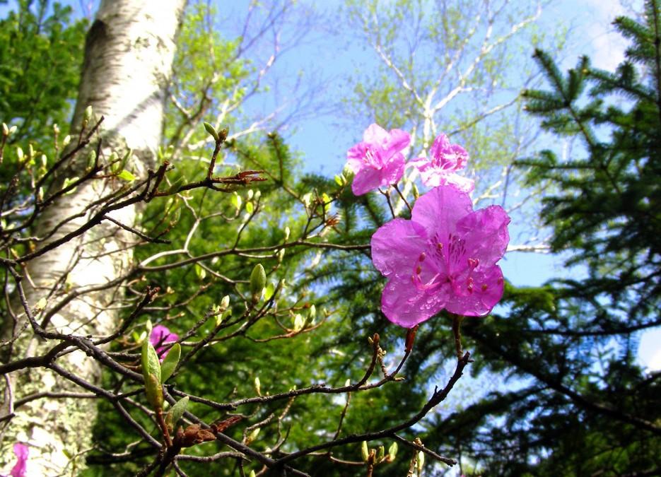 Весенний лес (ключ Смольный, Шкотовский р-н)   Разное