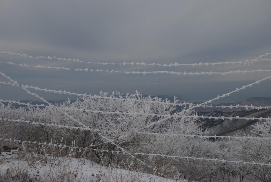 Колючка морозная | Партизанский район, выс. 1010 гора Чёрный куст
