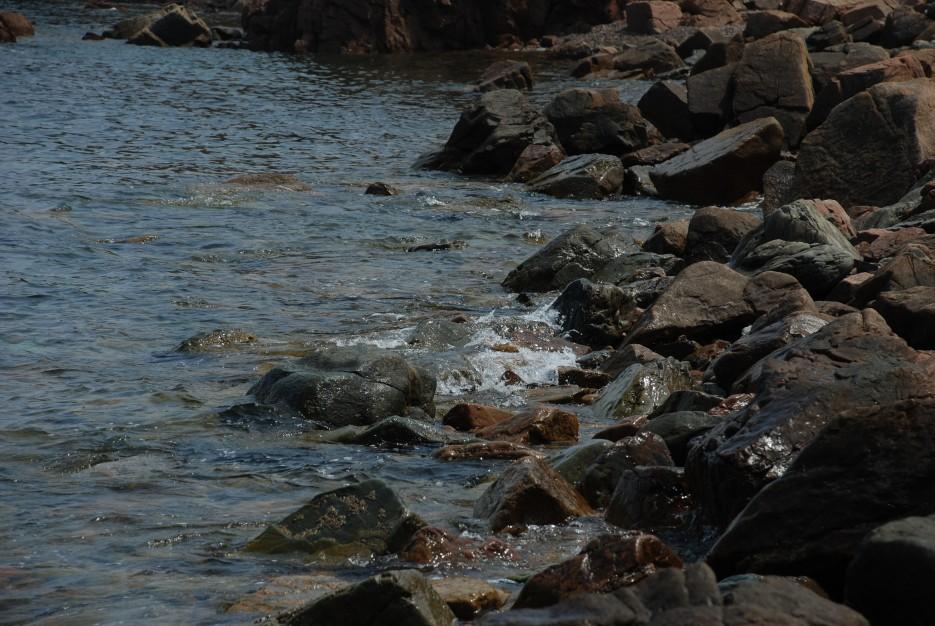 Побережье   Остров Наумова бакланьи гнезда