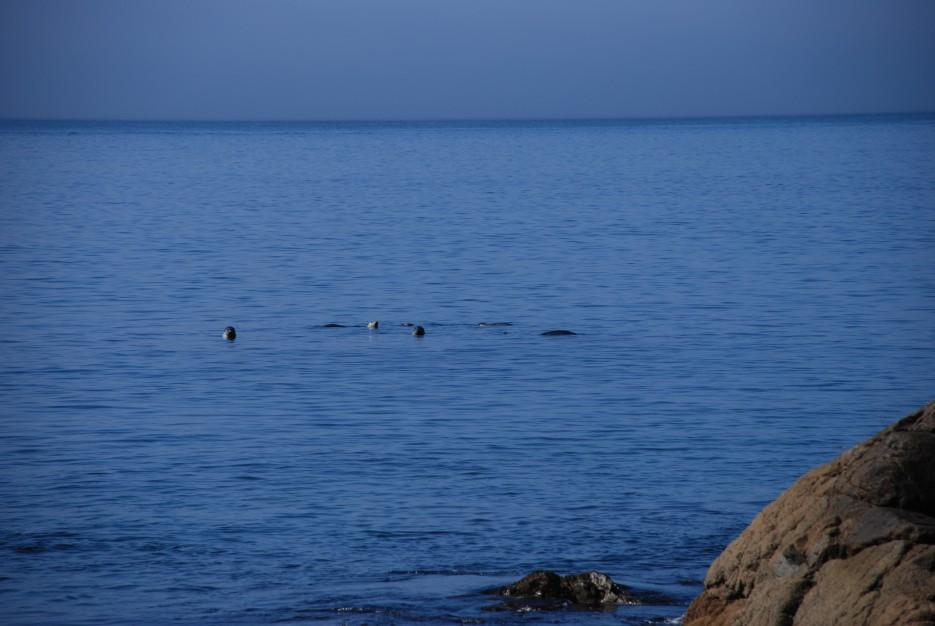 Ларги | Морской заповедник. Хасанский район.