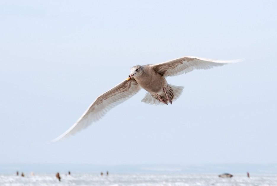 Голодный птиц с печенькой в клюве. | Остров Скребцова (Коврижка)