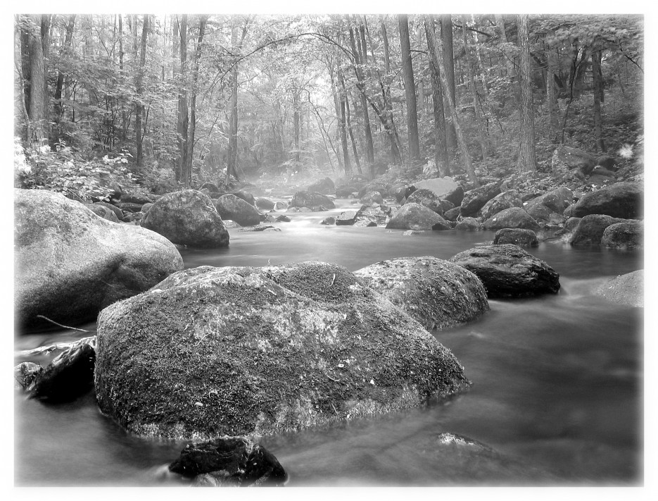 Таинственный лес (подножие Пидана)   Приморье