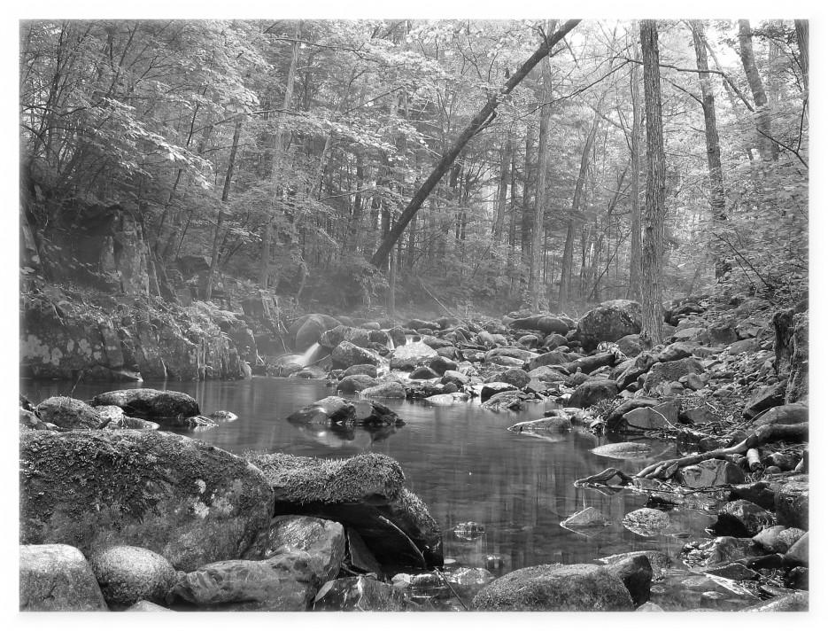 Лес (подножие Пидана) | Приморье