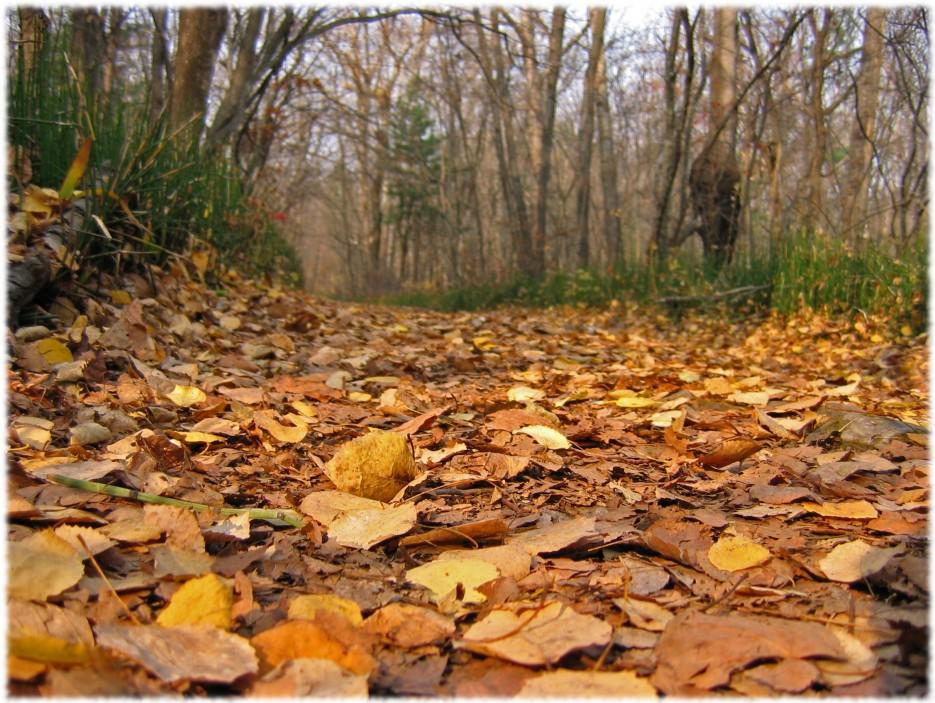 Ковер из листьев (район Фалазы) | Приморье