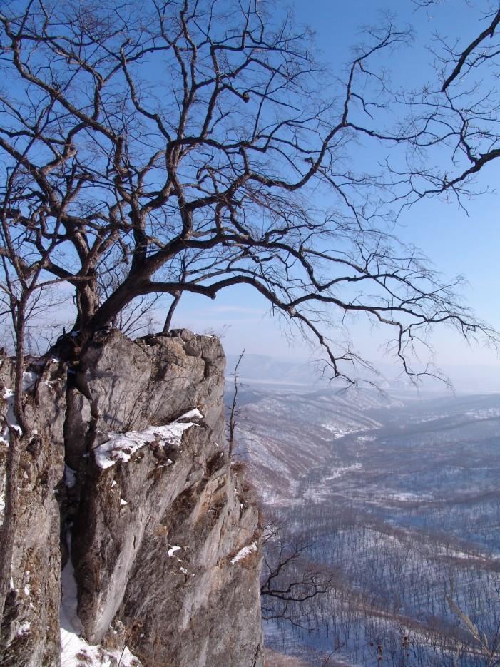 Дерево в скале. Пещеры хребта Чандолаз. Партизанский район.   Хребет Лозовый (Чандолаз) и пещеры. Партизанский район.