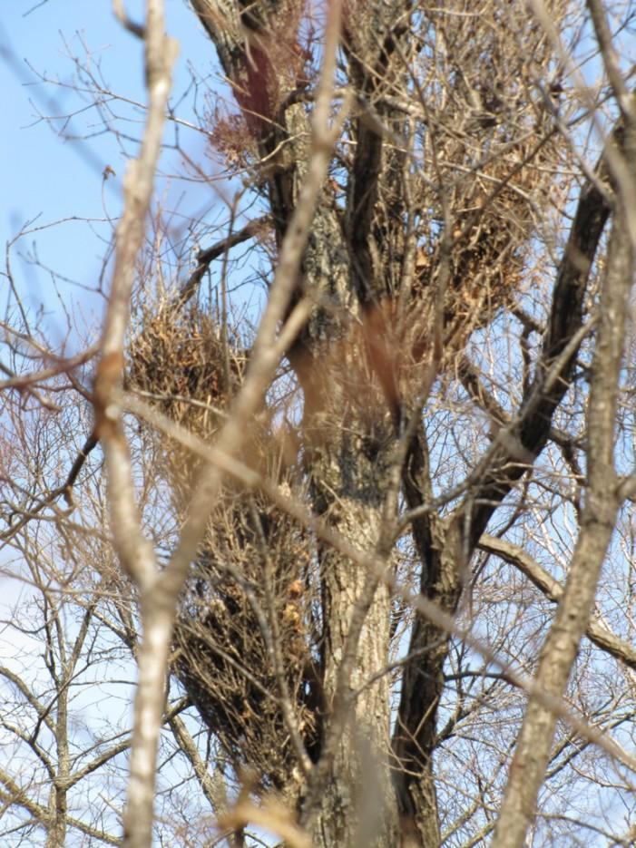 а вот и метелки на дереве растут) | хребет Океанский