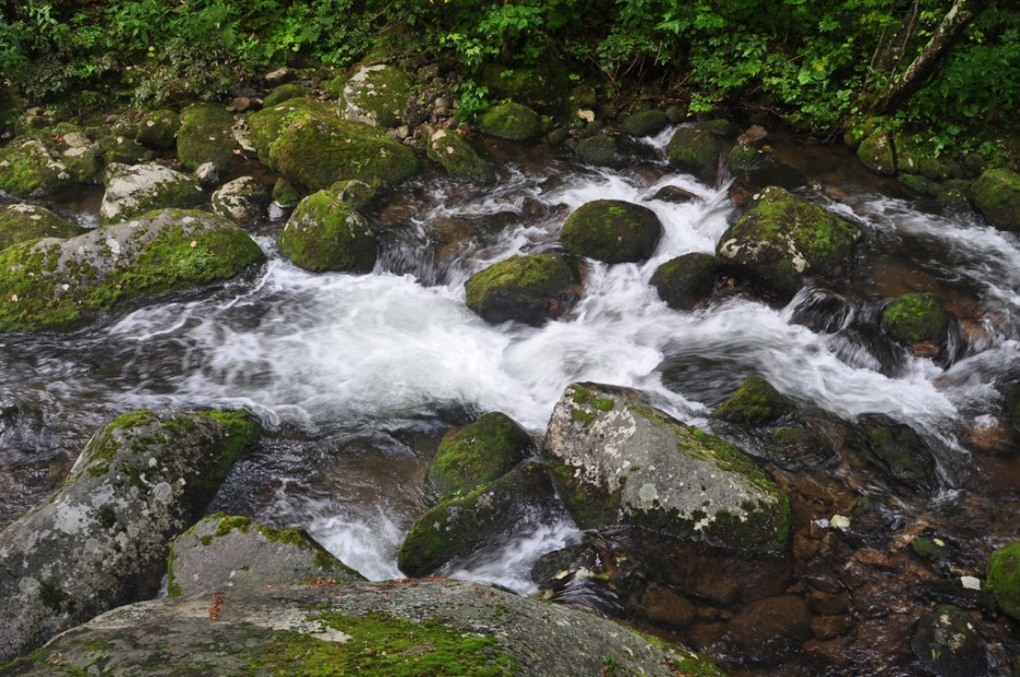 Stream.   Туманный Пидан (Лето). По левой тропе.