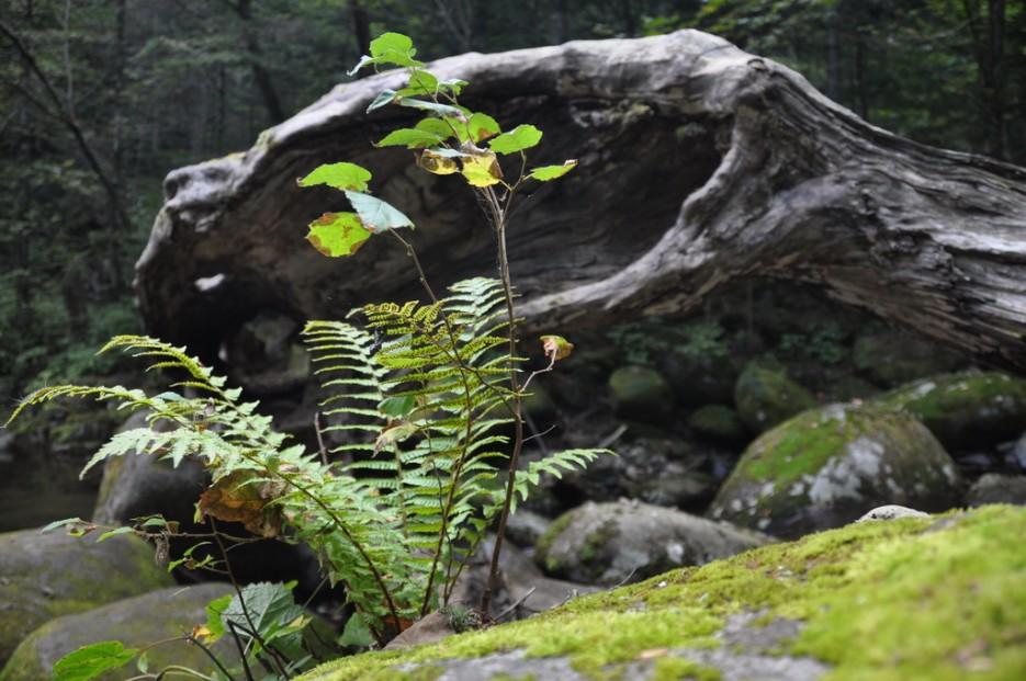 """На фоне пустого дерева.   Пидан - Поворот не туда (Лето). По правой тропе, а затем """"в лоб"""" по распадку."""