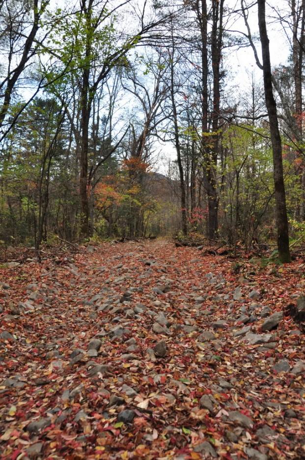 Всё усеяно листьями. | Сюрпризы осеннего Пидана. По правой тропе.