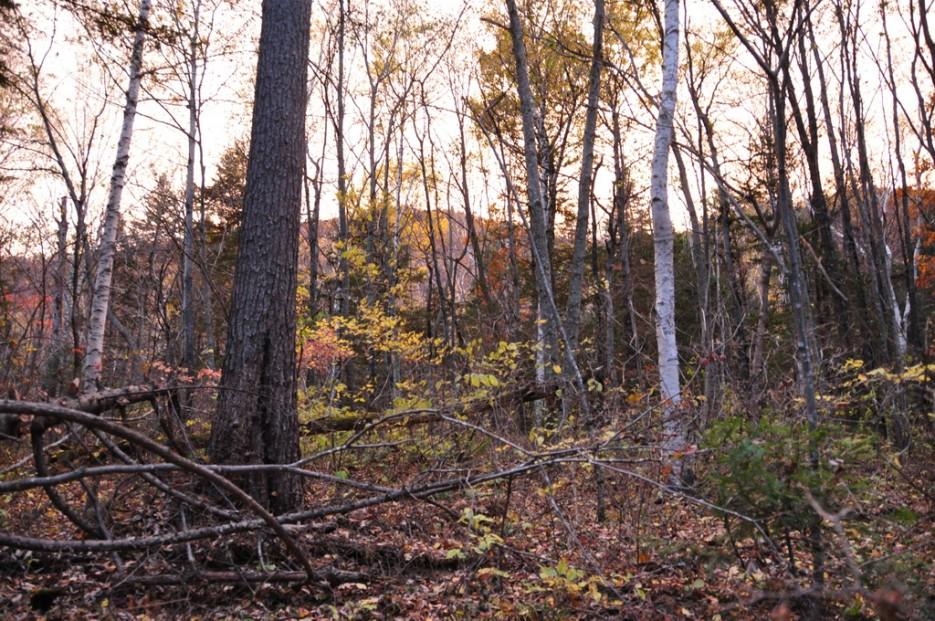 Розоватый свет при закате. | Сюрпризы осеннего Пидана. По правой тропе.