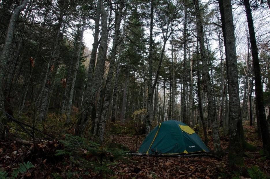 В тиши лесной...   Сюрпризы осеннего Пидана. По правой тропе.