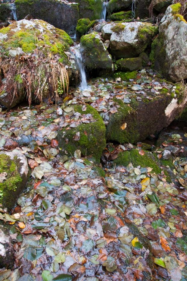 Вся поверхность запруды покрыта листьями. | Сюрпризы осеннего Пидана. По правой тропе.