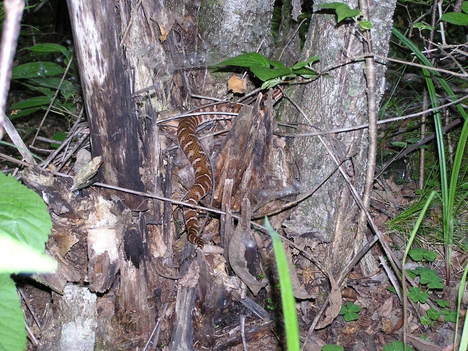 Змейка   Гора Пидан