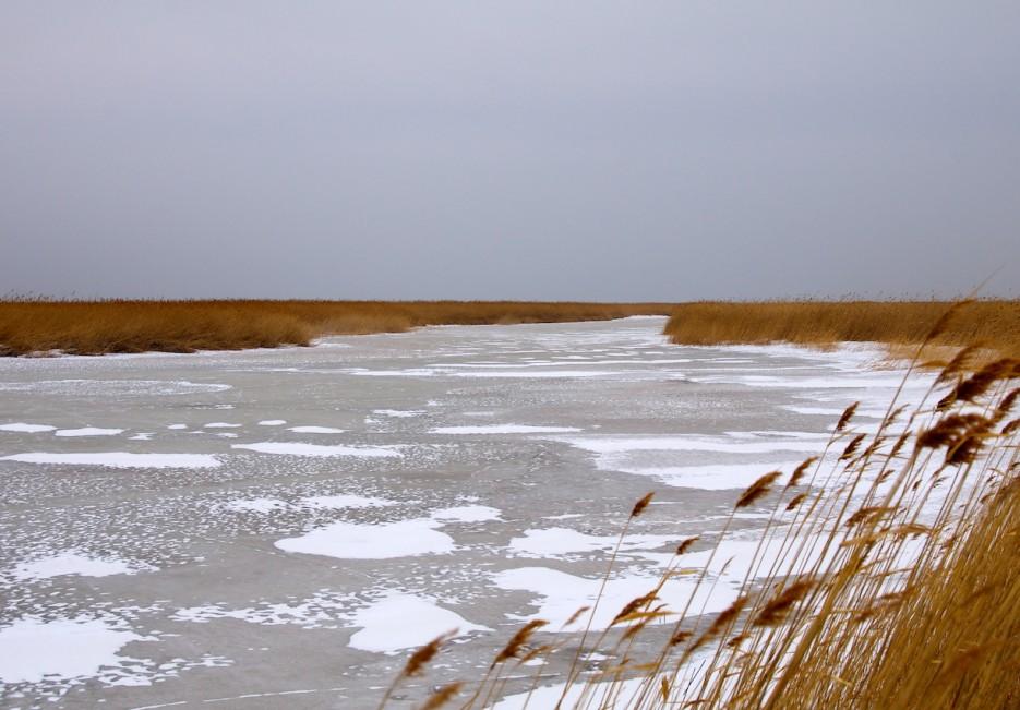 Замёрзшие протоки на болотах | Хасанские болота зимой