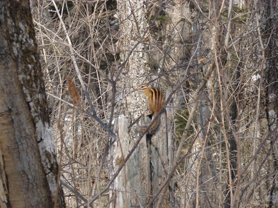 05.Бурундук.   1.04.2012 года. Водопад Тигровый. Шкотовское плато.