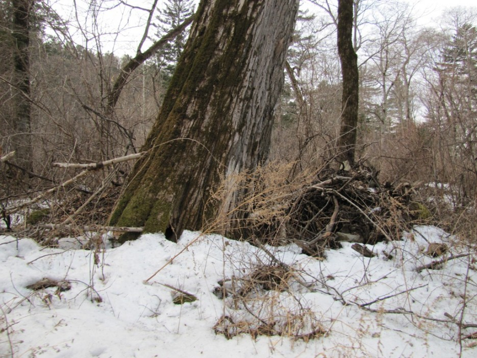 """и дерево, и траву ветер гнет в одну сторону   Ручей """"Глубокий ключ"""". Предчувствие весны."""
