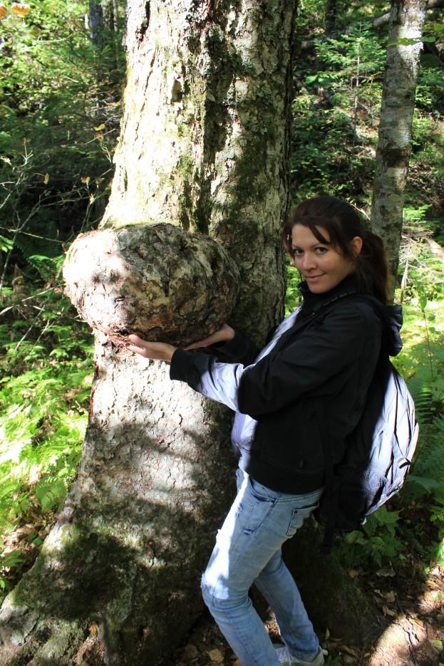 вот такие наросты на деревьях | г.Пидан сентябрь 2011