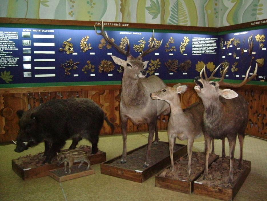 Экспозиция музея природы Лазовского заповедника | Лазовский район