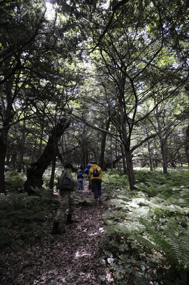 Лазовский заповедник | Лазовский заповедник и Беневские водопады