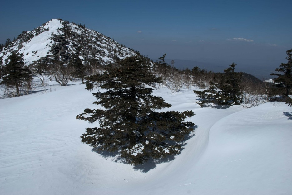 В лесу родилась елочка... | Гора Ливадийская (Пидан) 2012.04.07 Часть 2.
