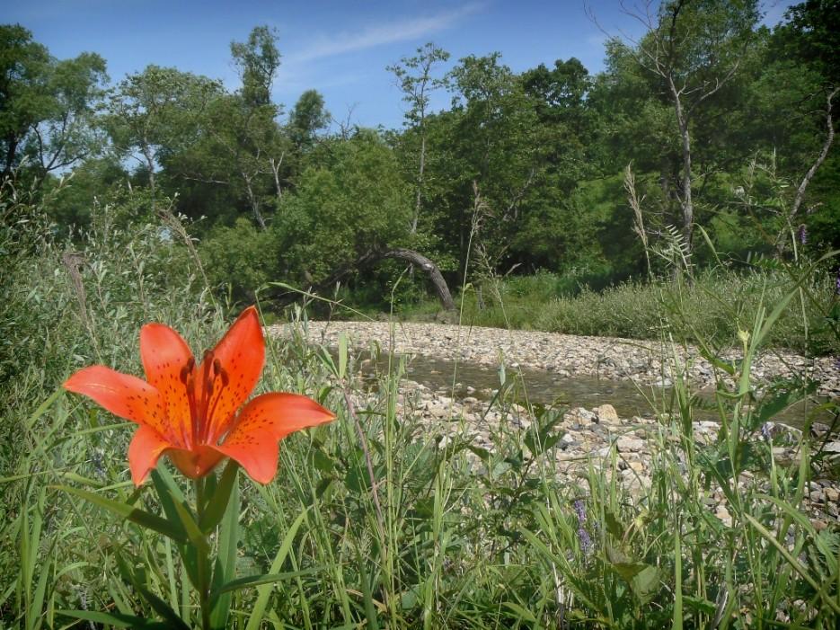 Речка Сухановка. | Леса, реки, горы Хасанского района