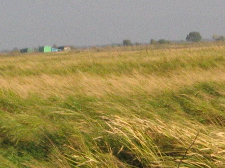 Трава | Окунево