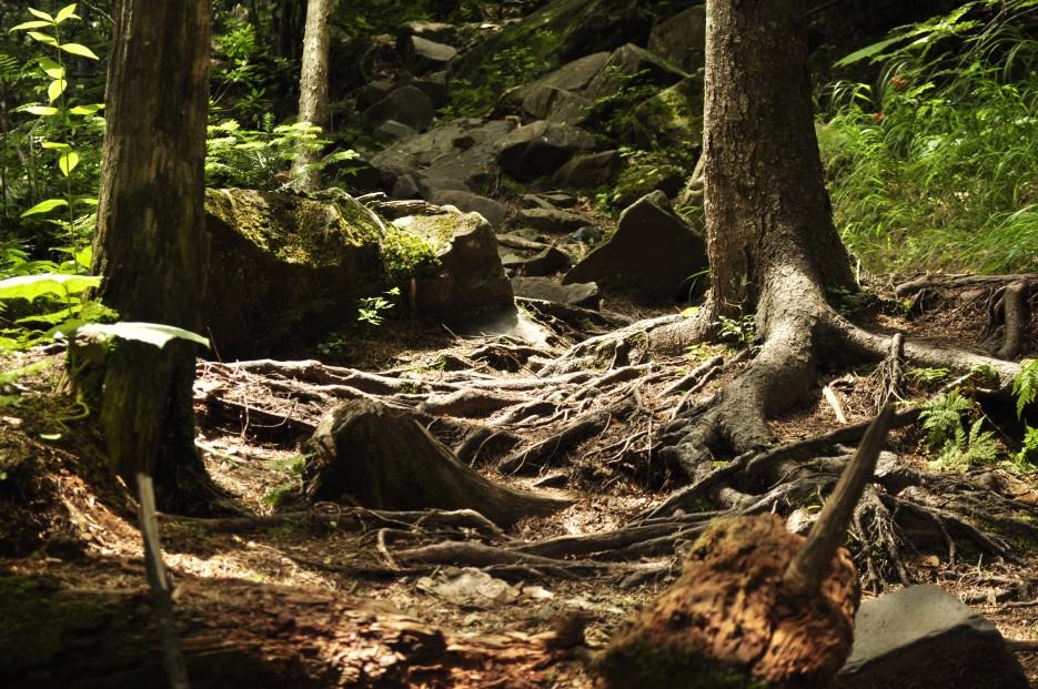 Фото 35729   Ливадийская гора (Пидан)