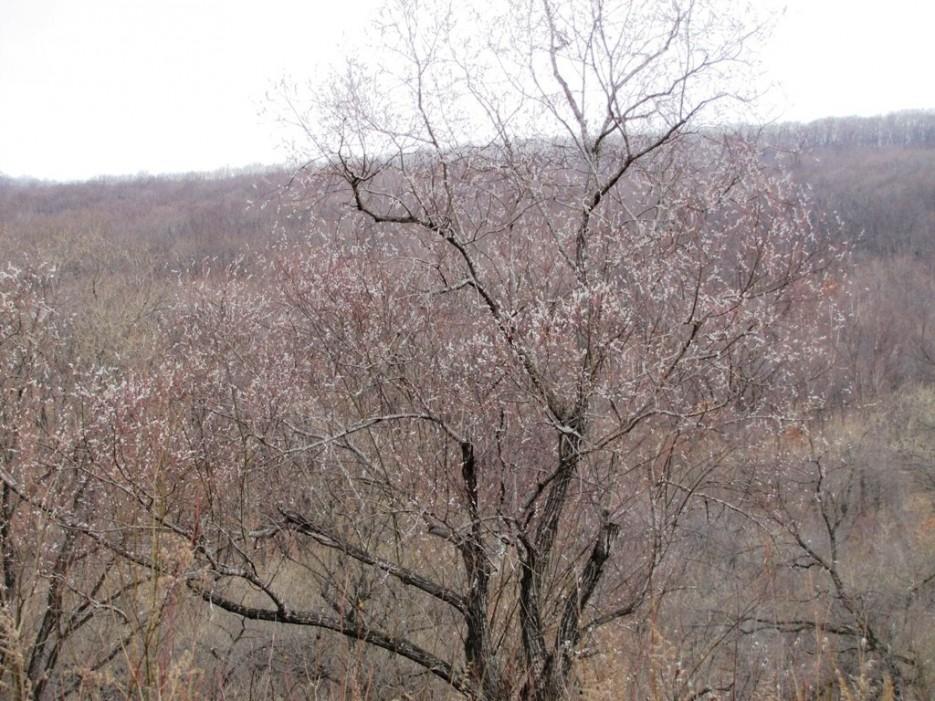 вербное воскресенье   гора Лысая - река Стеклянуха. Вербное воскресенье. С Праздником!