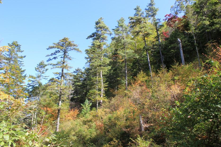 лес у подножья | г.Пидан сентябрь 2011