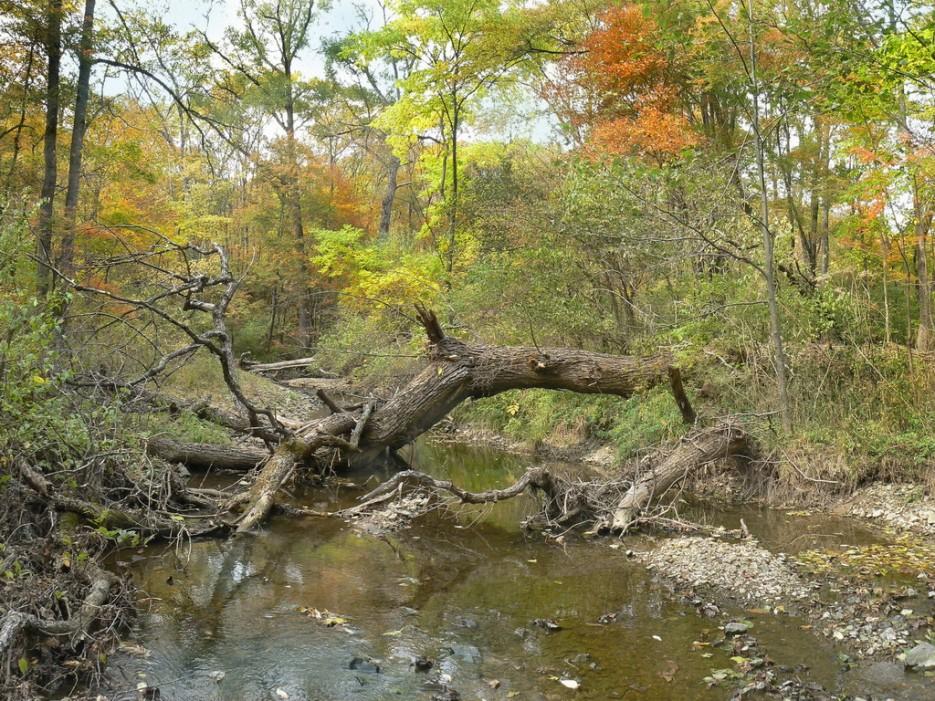 Река Алимовка. | Леса, реки, горы Хасанского района