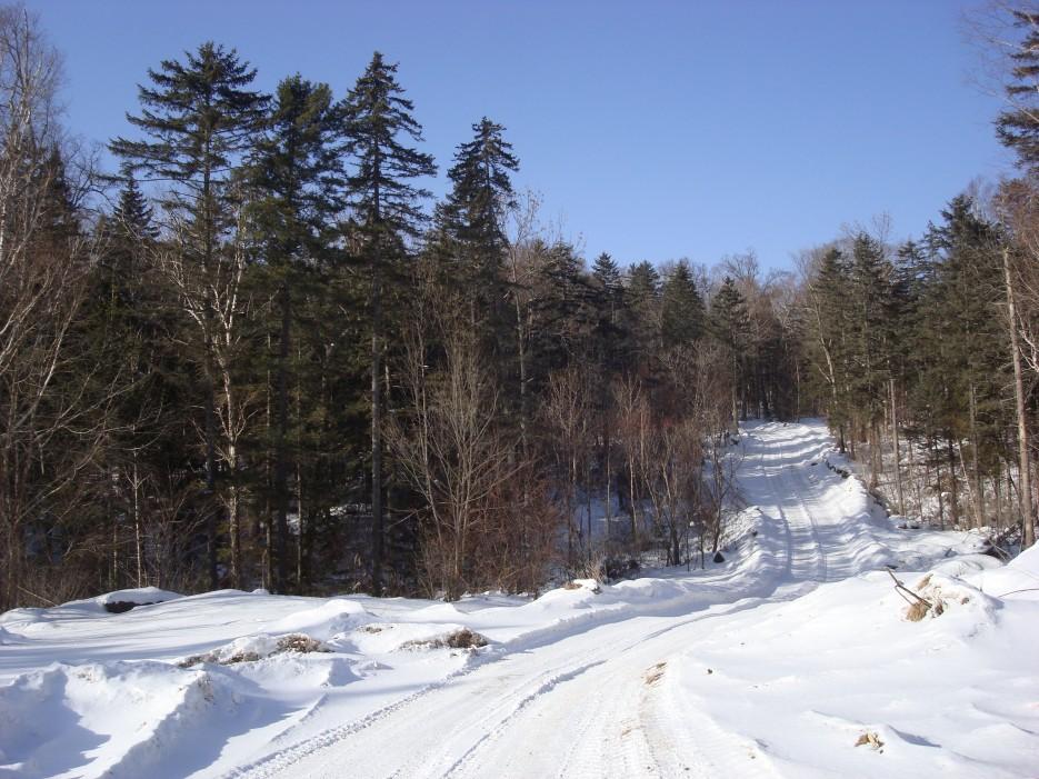 лесовозная дорога. район Шкотовского плато | Зима в Приморье