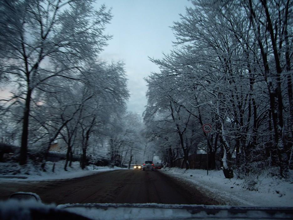 Поселок Трудовое. Деревья в снегу.   Поселок Трудовое. Деревья в снегу.