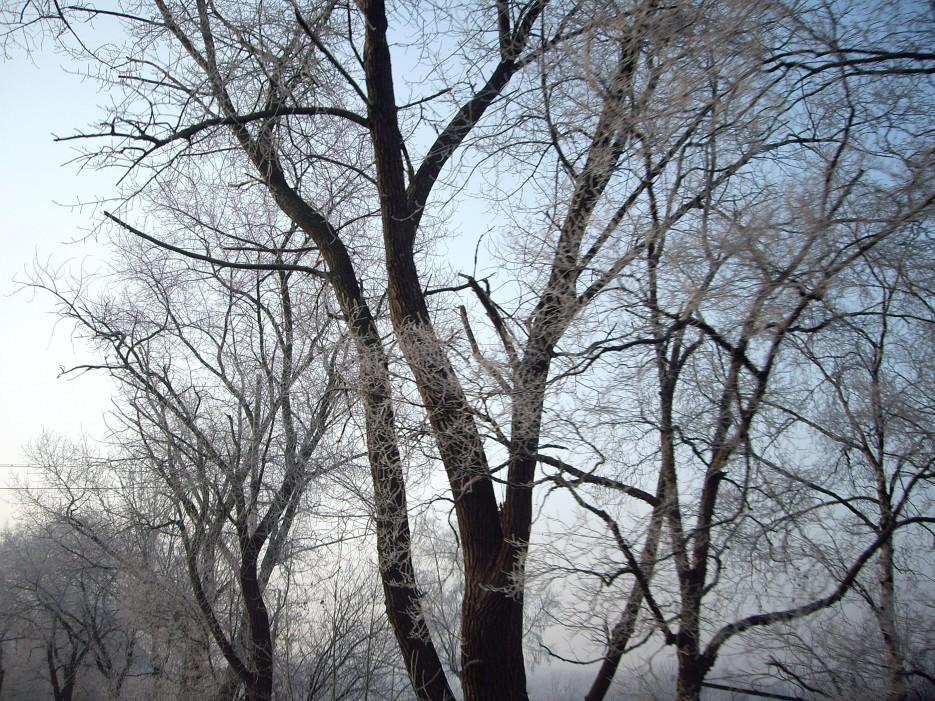 Поселок Трудовое. Деревья в снегу. | Поселок Трудовое. Деревья в снегу.