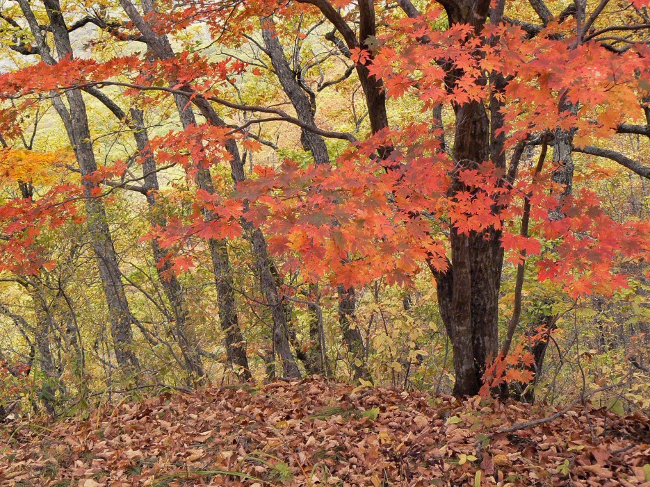 Осень. | Кравцовские водопады