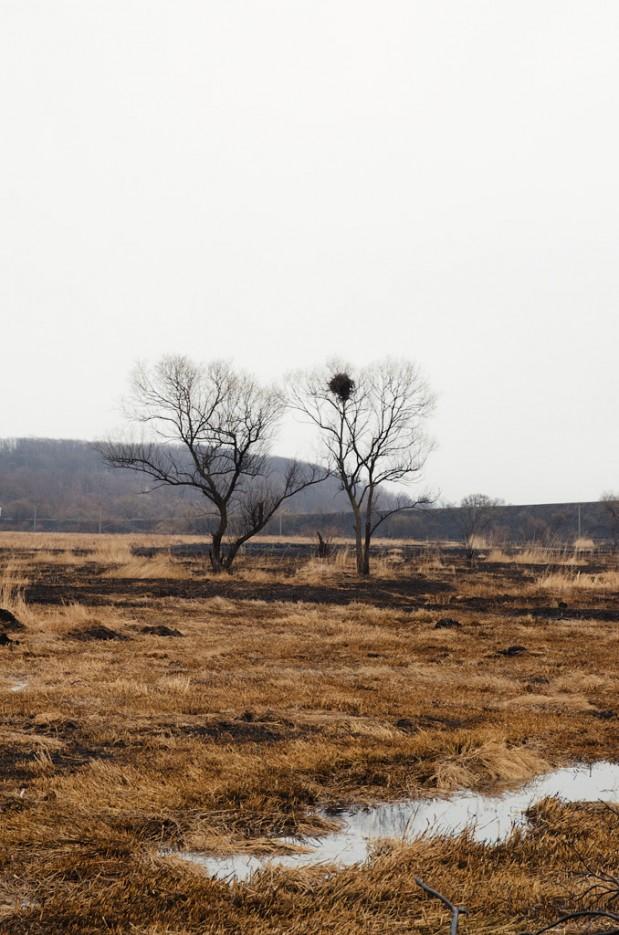 Наполовину выжженные поля. | Барановский вулкан. Надежденско-Уссурийский район.