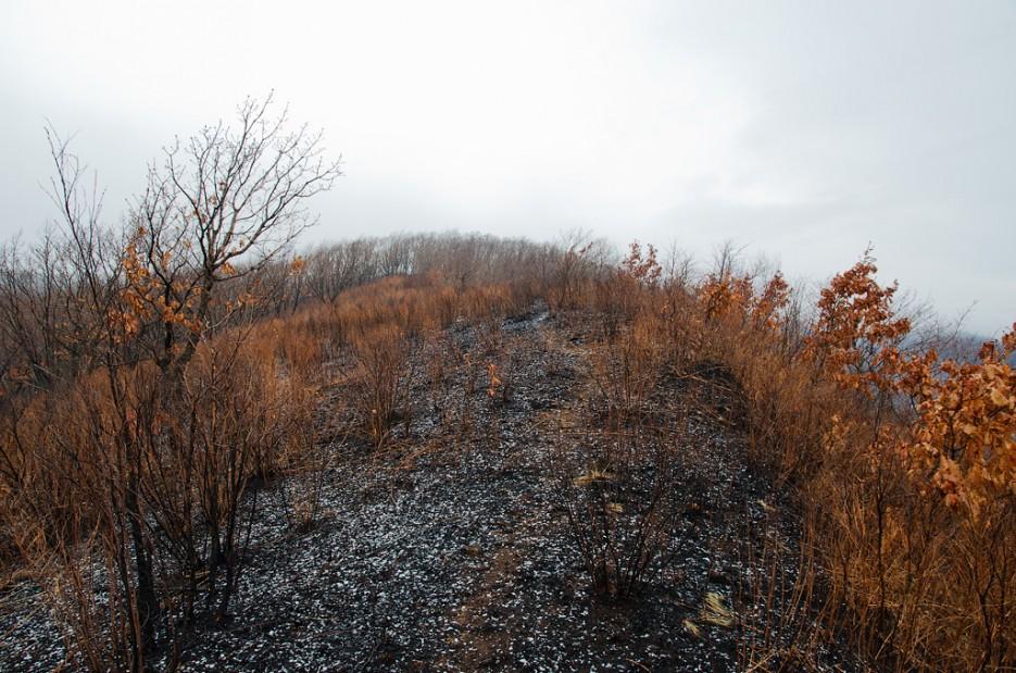 Снежные хлопья на обгоревшей земле. | Барановский вулкан. Надежденско-Уссурийский район.