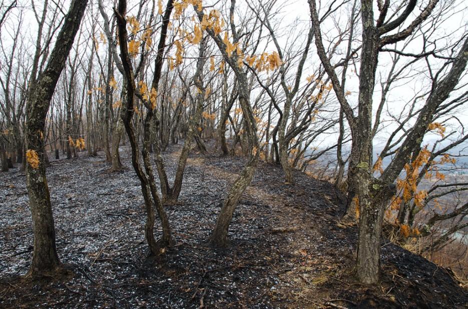 Тропинка петляющая между деревьев. | Барановский вулкан. Надежденско-Уссурийский район.