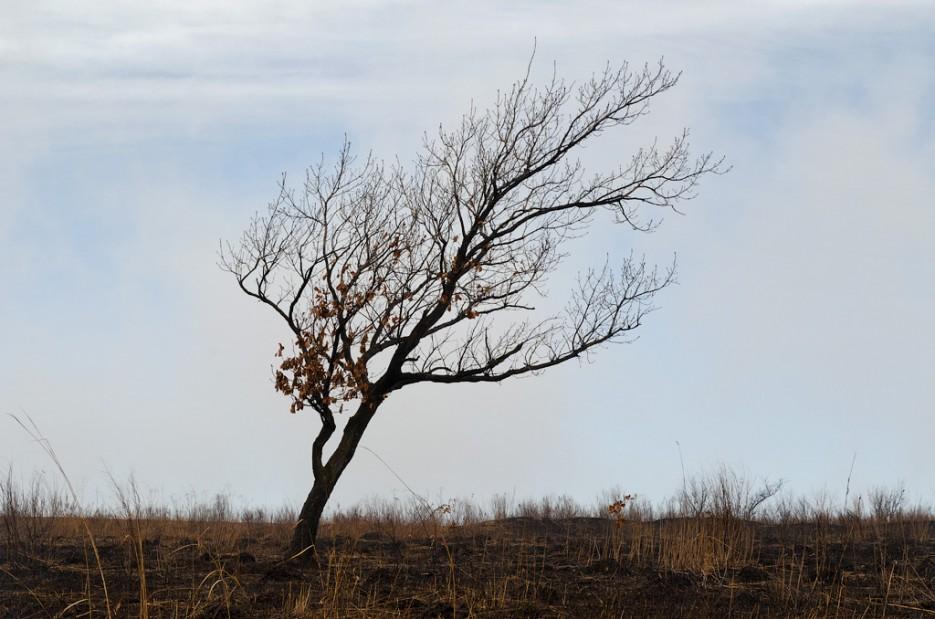 Кем то заботливо наклонённое дерево. | Барановский вулкан. Надежденско-Уссурийский район.
