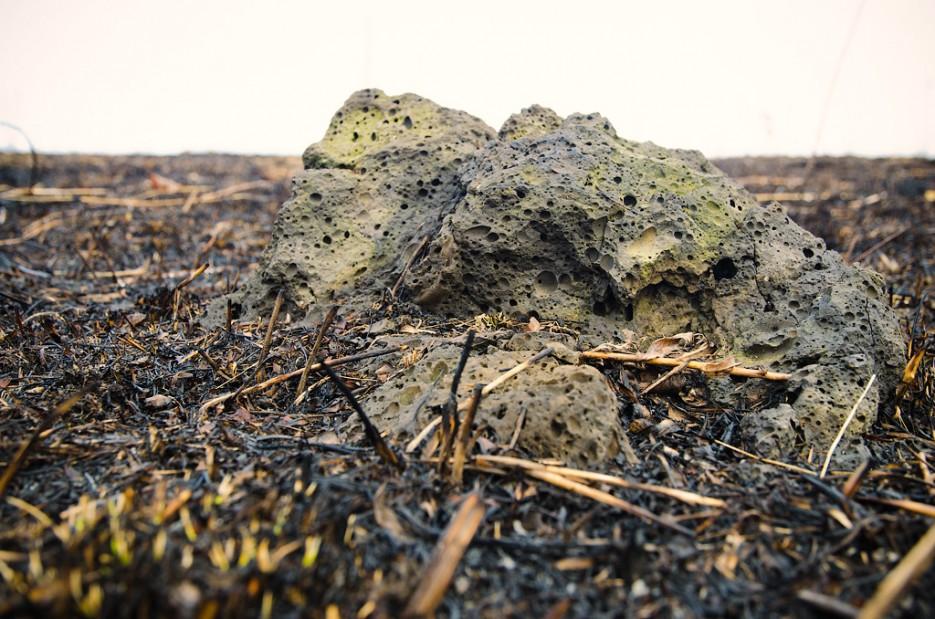 Из земли торчат вулканические бомбы.   Барановский вулкан. Надежденско-Уссурийский район.